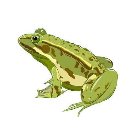 Illustration pour green toad with warts - image libre de droit