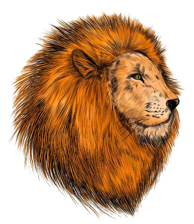 Illustration for the head of a lion realism orange - Royalty Free Image