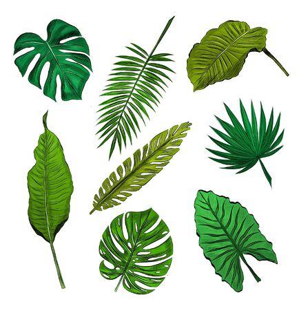 Illustration pour set of green palm leaves - image libre de droit