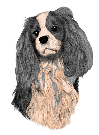 Illustration for Spaniel gray with light breast - Royalty Free Image