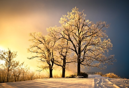 Photo pour Ice and Frost Covered Oak Tree in Cold Winter Snow at Jump Off Rock In Western North Carolina Blue Ridge Mountains - image libre de droit