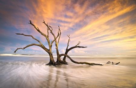 Folly Beach Dead Tree Driftwood Ocean Sunset Charleston SC Landscape scene in South Carolina