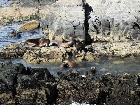 Sea lions on the coast of Ushuaia