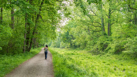 Photo pour Woman walking on path through forest next to Chesapeake and Ohio Canal - image libre de droit