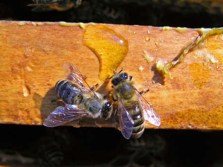 Bees collect the nectar poured on a framework.