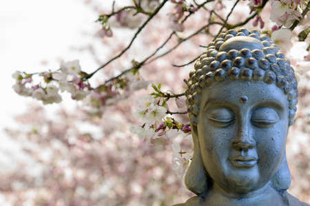 Zen Buddha Meditating by Cherry Blossoms Trees Blurred Background