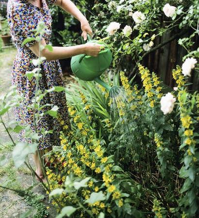 watering plants watering can baskets on window sill