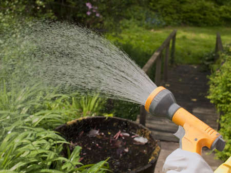 watering plants with a hosepipe in the garden