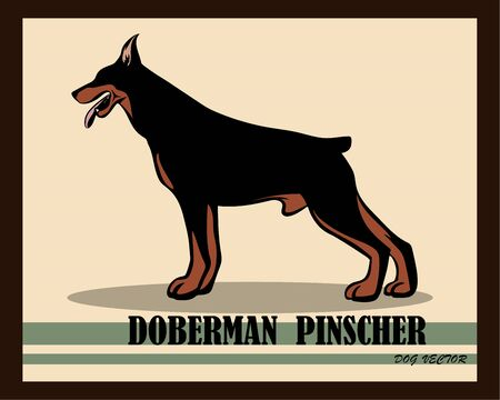 Illustration pour Vector Illustration logo of a Doberman Pinscher Dog. It is standing. - image libre de droit