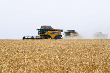 Foto für Combine harvester harvests ripe wheat. Agriculture. Wheat fields. - Lizenzfreies Bild