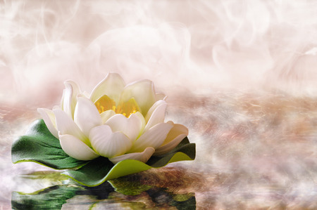 Water lily floating in warm water. Spa, relaxation, meditation and health concept. Horizontal composition.