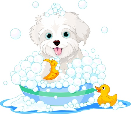 White fluffy dog having a soapy bath