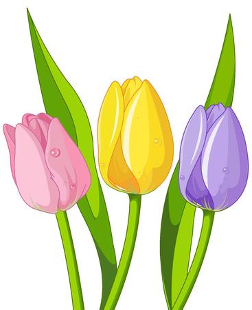 Illustration pour Illustration of bouquet tulips - image libre de droit