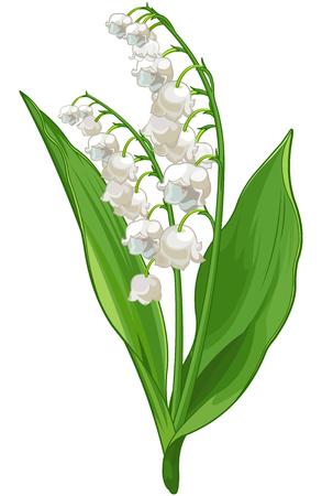 Illustration pour Illustration of Convallaria lily of the valley - image libre de droit