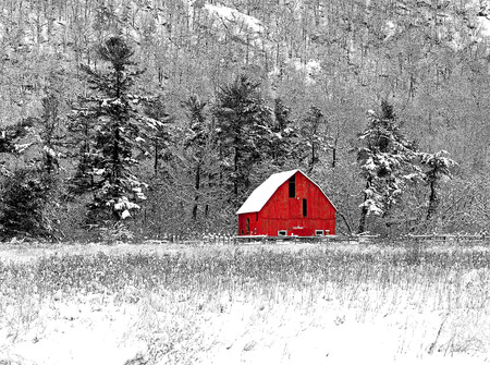 Red Barn 38