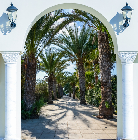 Palm Tree Archway