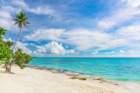 Photo pour Beautiful tropical landscape of the Atlantic Ocean palm against the skyPalm Ocean Sky - image libre de droit