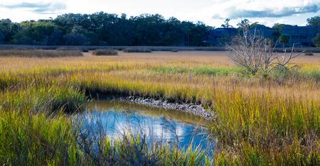 Photo pour Salt Water Pond in Marsh - image libre de droit