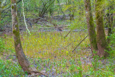 Spring Growth in Flooded Wetlands