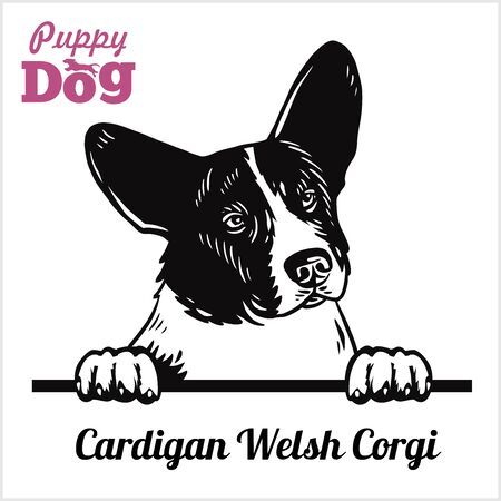 Illustration for Cardigan Welsh Corgi - Peeking Dogs - breed face head isolated on white - Royalty Free Image