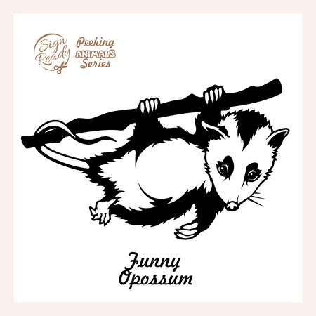 Illustration pour Possum hanging on a branch isolated on white - image libre de droit