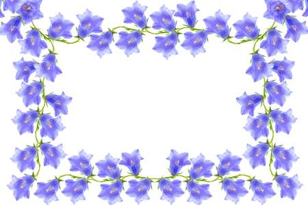bellflovers frame