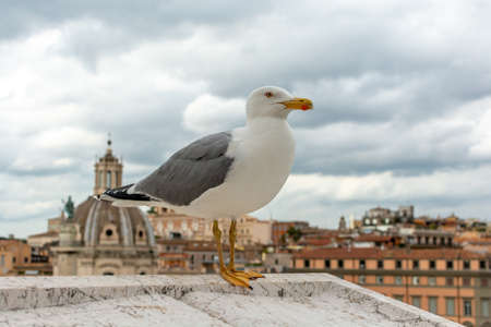 Photo for seagull on roof with roman center cityscape background - Royalty Free Image