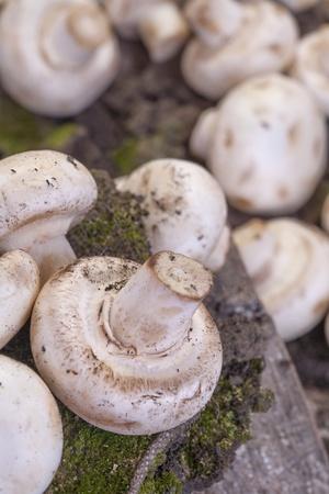 organically grown mushrooms