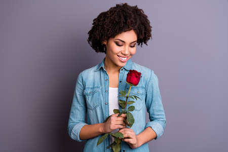 Photo for Close up photo beautiful amazing she her dark skin lady cheer flirty hands arms big red rose toothy satisfied boyfriend husband surprise wear casual jeans denim shirt isolated grey background - Royalty Free Image