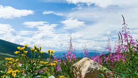 Flowers blooming in a Colorado Rocky Mountain Summer Landscape