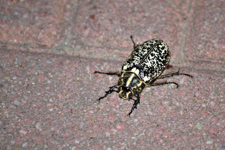 Foto per ugly scary bug that walks on the floor - Immagine Royalty Free