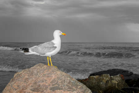 Foto per seagull leaning against a rock on the sea waiting for the storm coming from the sea - Immagine Royalty Free