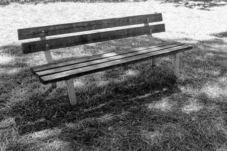 wooden bench in solitude in the shade of a pine forest