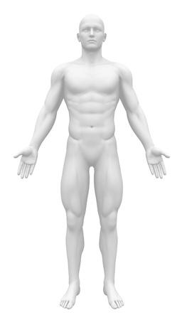 Photo pour Blank Anatomy Figure - Front view - image libre de droit