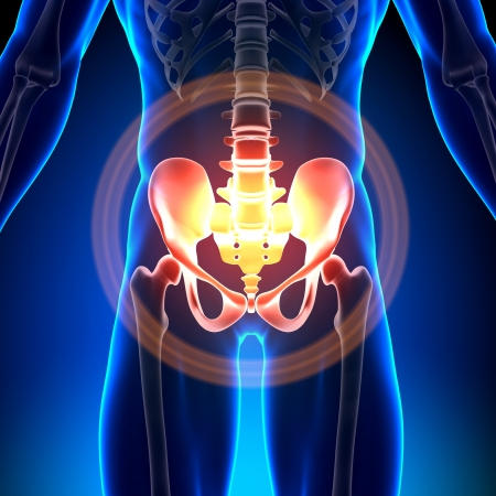 Hip Bone Skeleton Medical Anatomy