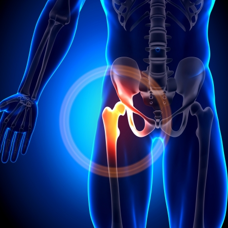 Hip Joint Anatomy Bones