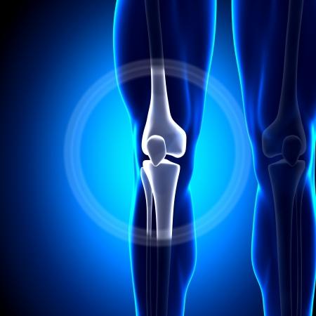 Knee Joint Anatomy Bones