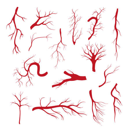 Set of blood vessels - modern vector isolated clip art