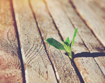 Green sprout growing in wooden boards . Ecology concept or new life concept