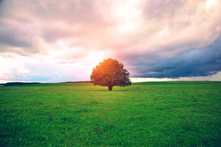 single oak tree in field under magical sunny sky
