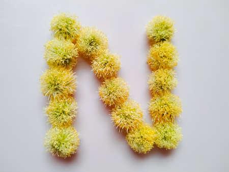Letter N alphabet made with Leucaena leucocephala or river tamarind flowers over white background