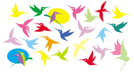 Colibri, hummingbirds. Illustration of a flying colorful birds. Vector drawing for Illustration.