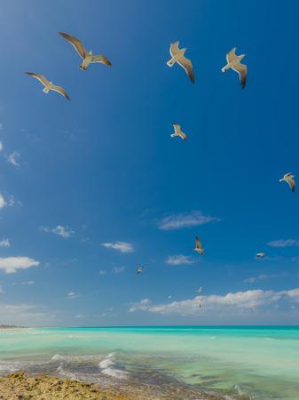 Foto de Natur background with seagulls flying above a sea. White seagulls over blue sky background. - Imagen libre de derechos