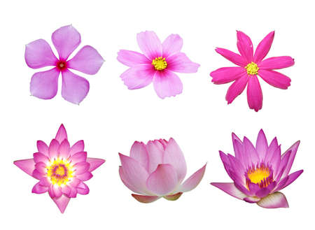 Photo for pink flower collection isolated in white background - Royalty Free Image