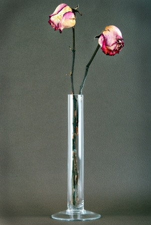 dried yellow and pink roses in a vase