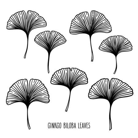 Illustration pour Ginkgo or Gingko Biloba leaf set. Nature botanical vector illustration, herbal medicine graphic in black isolated over white. - image libre de droit