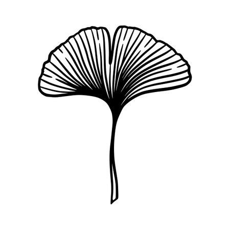 Illustration pour Ginkgo or Gingko Biloba leaf. Nature botanical vector engraving illustration, herbal medicine graphic in black isolated over white. - image libre de droit