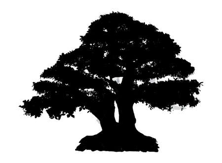 Photo pour Black Silhouette Tree Isolated on white background - image libre de droit