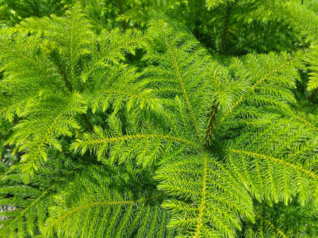 ligt green tree