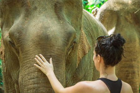 This picture is showing a woman who is caressing an Asian female elephant. It has been taken in Luang Prabang, Laos